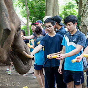 boys feeding an elephant